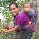 Vegetable Gardens, Community Gardens: Woman picking tomatoes in a community garden.