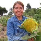 Woman with sunflower in community garden in California.