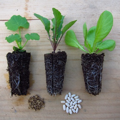 Magee seedlings and plugs for Urban Rooftop Vegetable Gardens.